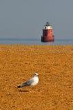 latarni morskiej frontowy seagull Zdjęcie Royalty Free