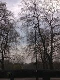 Latarnia i drzewa obrazy stock