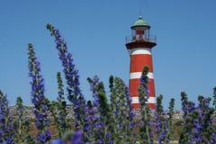 latarnia morska fioletowe kwiaty Obrazy Royalty Free