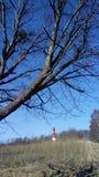 Latarnia morska i drzewo zdjęcie stock