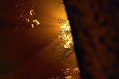 Latarnia uliczna za drzewem błyszczy mgłowy w jesiennej Blatenska ulicie w czeskim Chomutov mieście przy nocą Zdjęcia Stock