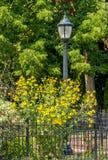 Latarnia z ogrodzenia i koloru żółtego kwiatami Zdjęcia Stock