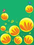 Latarniowy księżyc kwiat Zdjęcia Stock