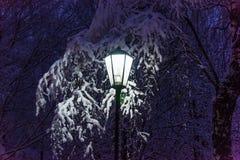 Latarniowy noc śniegu drzewo Obraz Stock