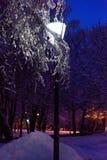 Latarniowy noc śniegu drzewo Fotografia Stock