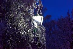 Latarniowy noc śniegu drzewo Obraz Royalty Free