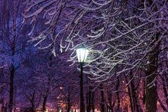 Latarniowy noc śniegu drzewo Obrazy Stock