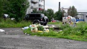 Latas de lixo de transbordamento na cidade com pombos, cães e gato vídeos de arquivo