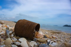 Latas e shell da costura na praia Fotos de Stock Royalty Free