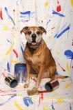 Latas grandes del perro y de la pintura Fotografía de archivo