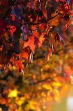 Late afternoon in autumn Royalty Free Stock Photos
