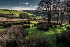 Late Afternoon in Early Spring, Rhondda. A sun dappled field of pasture and bare oak trees on an early spring afternoon in march. Tonyrefail, Rhondda, Wales Stock Photo