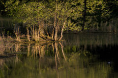 Late Afternoon Over The Pond Royalty Free Stock Photo