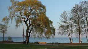 Late Afternoon at the Park. Afternoon at the park with view of the lake stock video footage