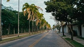 late afternoon ride across the city with tall palm trees next tu the road royalty free stock images