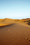Late afternoon on Sahara desert Royalty Free Stock Photo