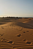 Late afternoon on Sahara desert Royalty Free Stock Images
