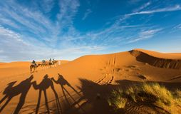 Late afternoon shadows of Dromedary camels and caravan led by Tuareg man in Merzouga, Erg Chebbi, Morocco. Africa stock photography