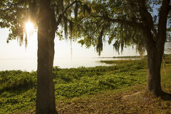 Late afternoon shoreline of scenic Lake Apopka in Florida. Sun shining through moss draped branches on the shore of Lake Apopka in Magnolia Park, Florida Stock Image