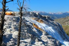 Canary Spring, Upper Terraces, Mammoth Hot Spring, Yellowstone National Park, Wyoming royalty free stock photos
