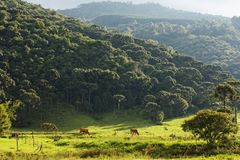 Late afternoon sun washes pasture and forest beyond stock photos