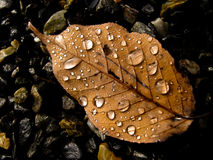 In late autumn. Late autumn leaves, crystal clear water Royalty Free Stock Image