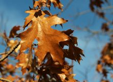 Late autumn. Autumn is coming to an end. Become colder. Nature prepare for winter Stock Photography