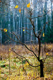 Late autumn. Royalty Free Stock Photos