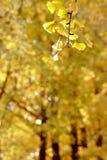 Late autumn Stock Photography