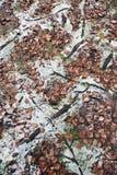Late autumn background. Stock Image