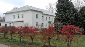 Late autumn, bright red decorative bushes on a green background. Autumn landscape of Tolgsky monastery Stock Images