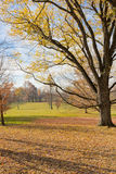 Late Autumn at countryside. Royalty Free Stock Photo