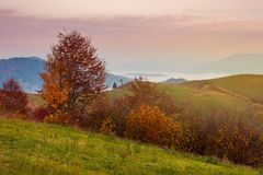 Late autumn dawn with pink sky in mountains. Red foliaged trees on the grassy hill. rising fog in the distant valley stock photos
