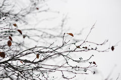 Late autumn. Empty tree branches in late autumn Royalty Free Stock Image