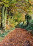 Late Autumn in an English Wood Stock Photos