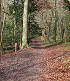 Late Autumn in an English Wood Royalty Free Stock Image