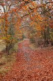Late Autumn on an English Woodland track Royalty Free Stock Photography