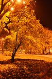Late autumn evening in the city park. The yellow leaves of the trees appear golden under the light of street lamps royalty free stock photography