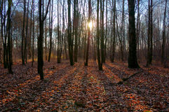 Late autumn forest Royalty Free Stock Image