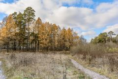 Late Autumn In Forest Royalty Free Stock Image