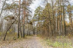 Late Autumn In Forest Stock Images