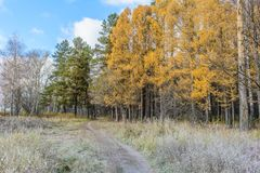 Late Autumn In Forest Stock Photography