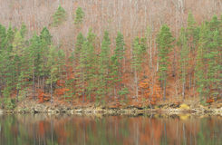 Late autumn forest lake Stock Image