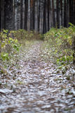 Late autumn in the forest. Path among the bushes with hoarfrost in the late autumn in the forest Stock Photos