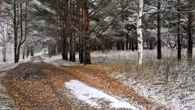 Late Autumn, forest road. And the first snow Stock Photos