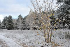 Late Autumn, forest road and the first snow. On yellow leaves.n Stock Photography