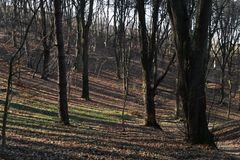 Late autumn in forest Stock Image