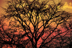 Free Late Autumn Forest Tree Branches Without Leaves, Filtered Background. Stock Photography - 90056072