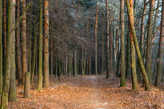 Late autumn in the forest. Royalty Free Stock Photos