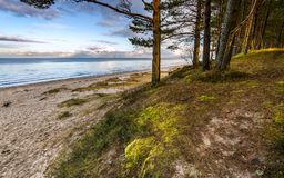 Late autumn at the forestry beach of Jurmala Stock Photos